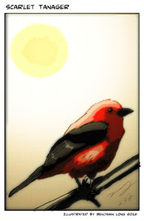 Scarlet Tanager Dark Contrast by Benjamin Long