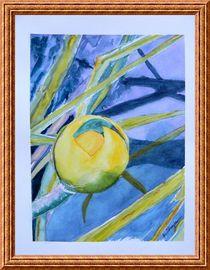Water Lily Habitat 2 by Warren Thompson