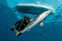 Shark Conqueror by Norbert Probst