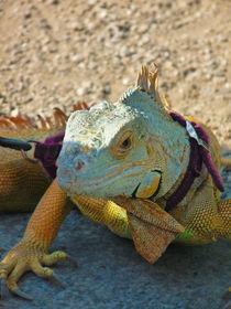 Reptile by Alberto Vaccari