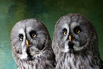 Double Take, Pair of Owls by Dawn OConnor