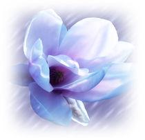 Magnolia blues von sharon lisa clarke
