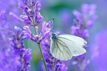 Butterfly von Violetta Honkisz