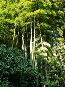 Bambuswald by Ariane Kujas