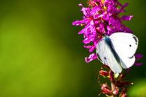 butterfly 2  von Jolie  Jolie
