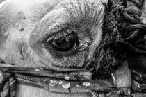 eye of the camel  von Jolie  Jolie