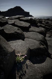 'Giant's Causeway' by Tom Hanslien