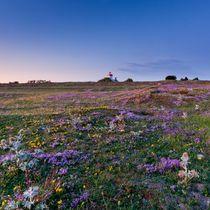 Summer Twilight  von Maciej Markiewicz