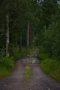 Path through the woods on a summer night. by kbhsphoto
