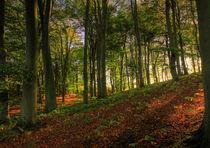 Autumnal-woodland