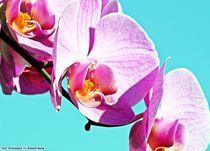 Orchideae3 by Ridzard  König