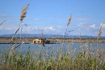Sizilien, Hausruine am See by sandarine