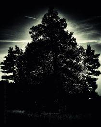 Midnight-sentinel