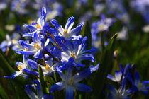 Frühlingsblumen by Wolfgang Dufner