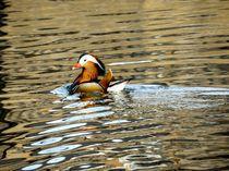 Swimming-beauty