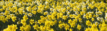 Glorious Spring von James Biggadike