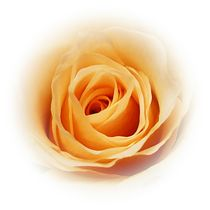 Peachy by sharon lisa clarke