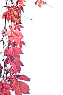 Herbstwonne von Katharina Weigl