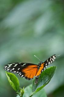 Schmetterling - bereit zum Abflug von Katharina Weigl