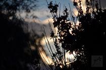 Shadows.... von Jakob Astor