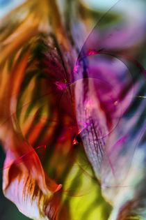Tulip Design by Markus Wegner