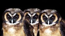 Feathered Friends von John Biggadike