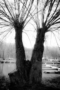 Baum-zwilling-0150