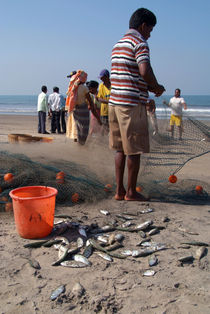 Fishermen-sorting-the-catch-arambol