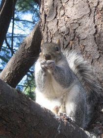 Squirrel  by Azzurra Di Pietro