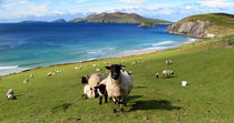 View of the Blasket Islands von Barbara Walsh