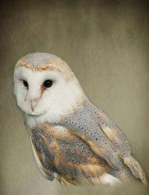 Barn Owl by Jacqi Elmslie