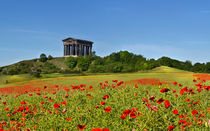 Penshaw Monument by Kevin Tate