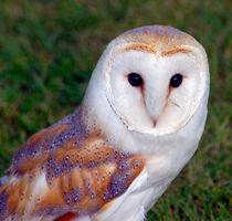 Owl by Sam Smith