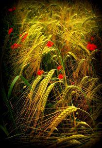 Getreidefeld  by Elke Balzen