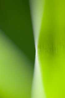 green leaf by dclick
