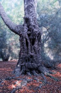 Woodface by Nigel  Bangert