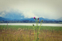 Memories.. by Martina Raab