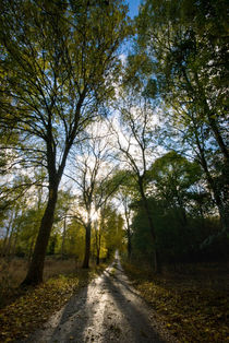 Sunlit Lane by Nigel  Bangert