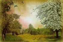 Frühlingserwachen  by Elke Balzen