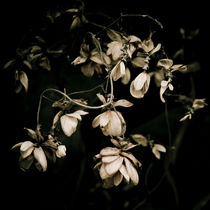 Wilting flowers and darkness by Lars Hallstrom