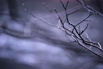 Frostiger Wintertag by Josephine Brücher