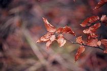 Herbstblätter  by Josephine Brücher