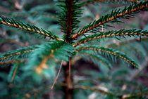 Details im Herbstwald by Josephine Brücher