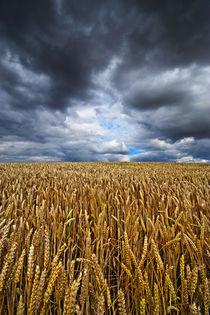 Crop by Nigel  Bangert