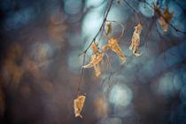 Winter bokeh by Levente Bodo