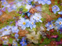 Frühlingsboten von claudiag
