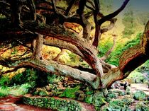 100-5951-dot-jpg-vecchio-albero-magnifico-magnificent-old-tree