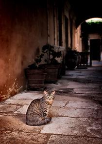 Cat In Monastery von Graham Prentice