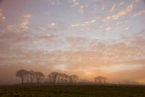 Morning-mist-1141-in-ps-copy-2