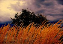100-4466-dot-jpg-wild-grasses-blowing